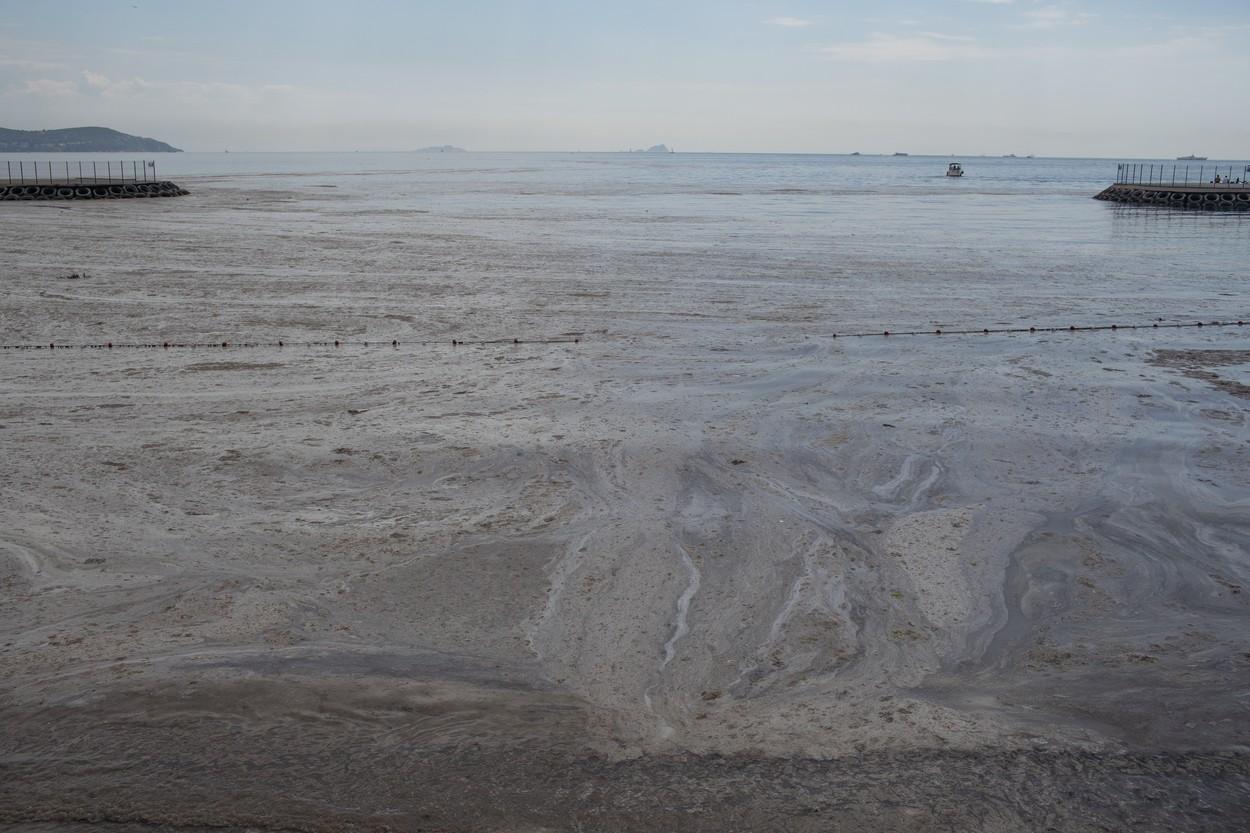 mucilagiu marin marea marmara