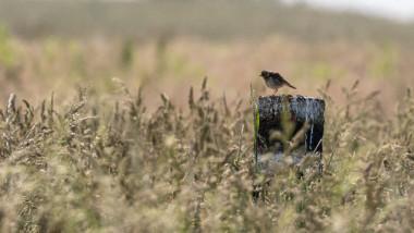 Solitary bird