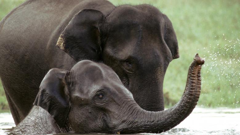 doi elefanti in apa