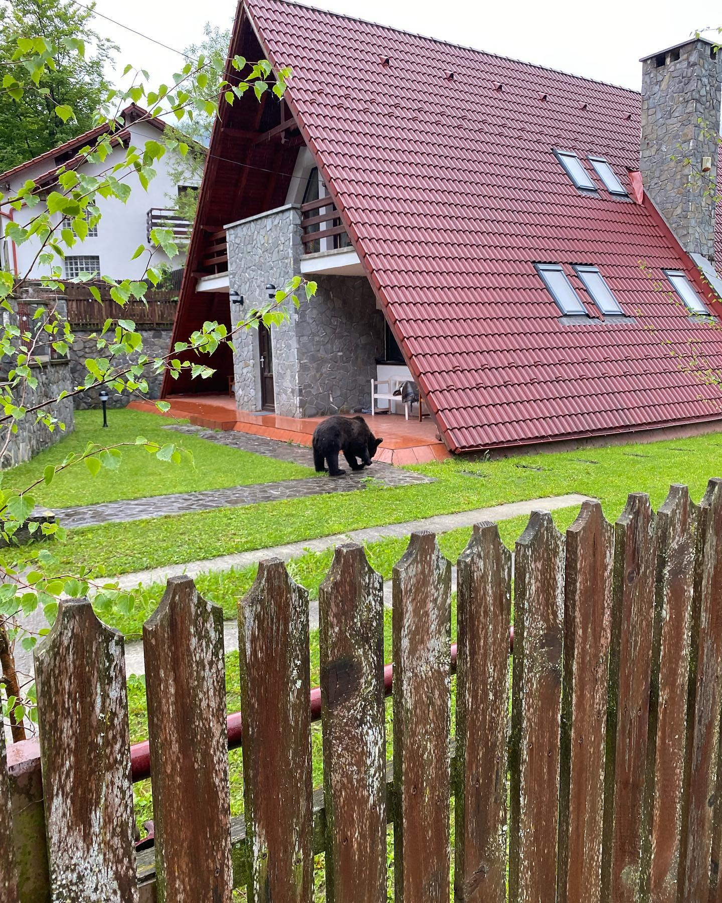 VIDEO | Pui de urs filmat in curtea unei case, la Sinaia