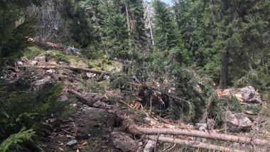 padure munte ceahlau roca cazuta