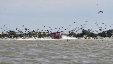 delta barca pelicani 2