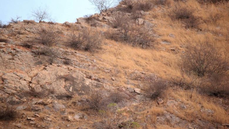 În această fotografie, un leopard de relaxează liniștit