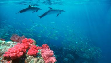 delfini mare ocean apa