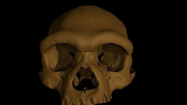 craniu de homo longi - captura video