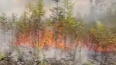 incendiu siberia digi