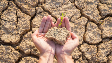 hands holding rice growing on cracked earth concept save the earth