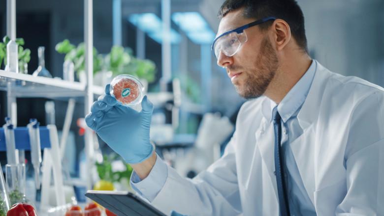 Om de știință studiază o mostră de carne produsă artificial, în laborator