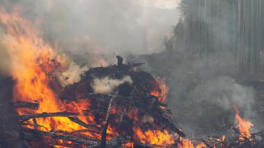 incendiii de vegetație