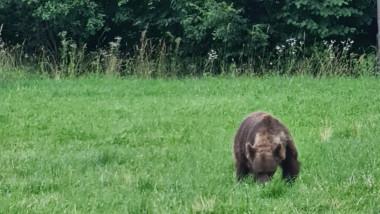 urs fotoggrafiat in covasna pe un camp de ministrul mediului tanczos barna