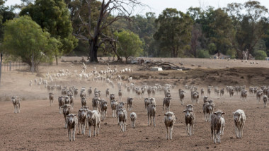 New South Wales Farmers Battle Crippling Drought
