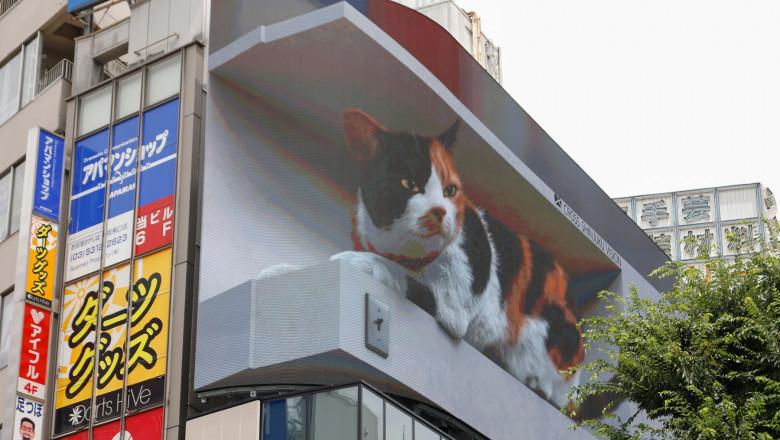 Big 3D Cat Appears on a Billboard in Tokyo