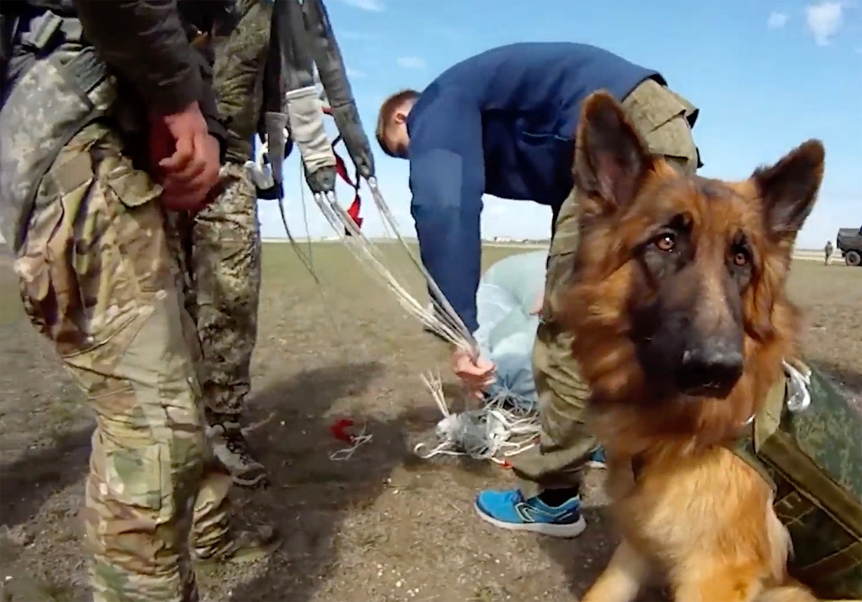Putin's dogs of war parachute into battle zones in latest Russian military tests