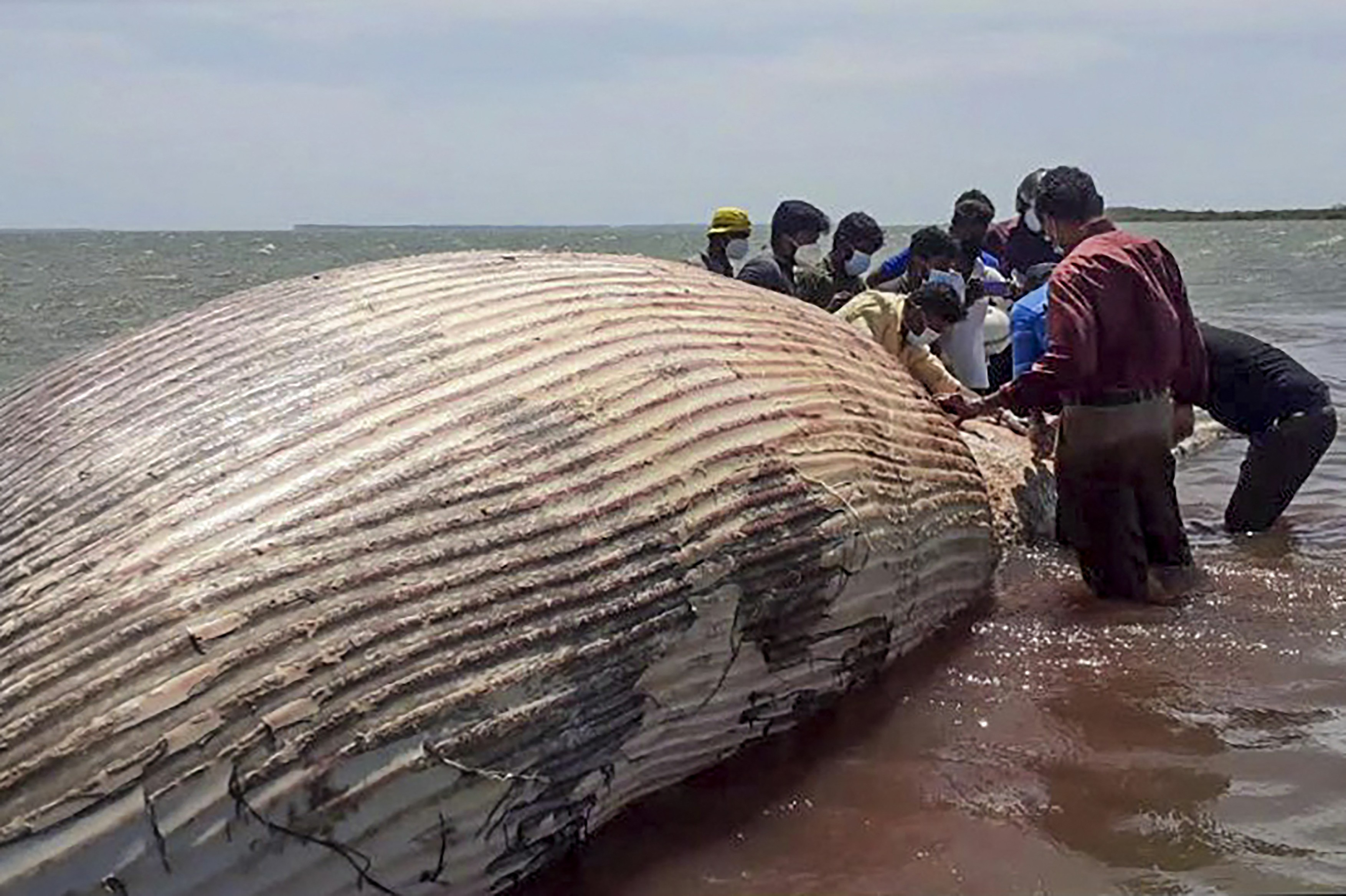 profimedia-balena moarta sri lanka