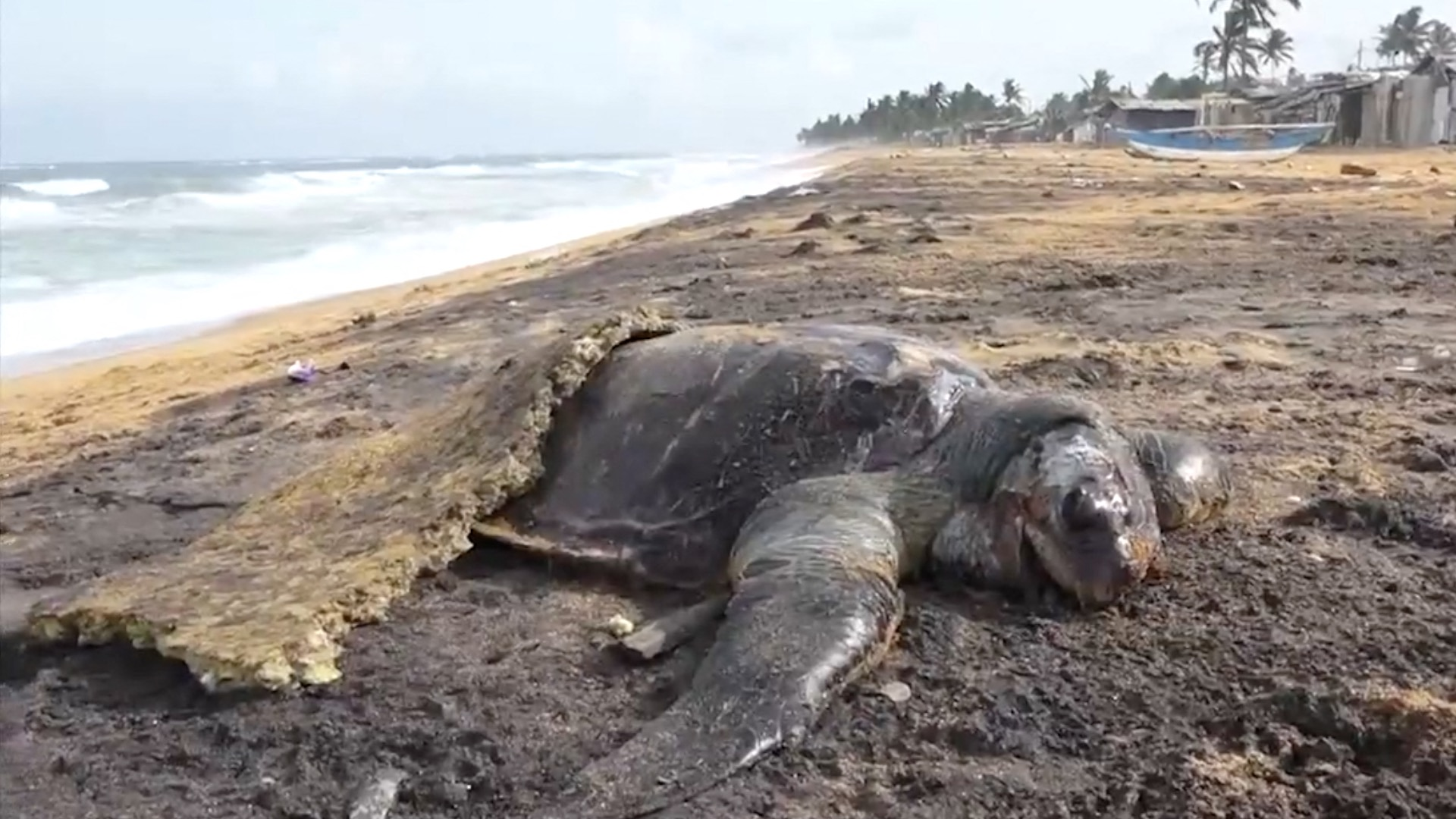 profimedia-dezastru ecologic sri lanka