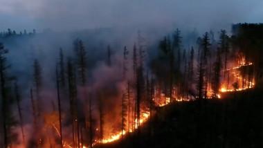incendiu-siberia-padure