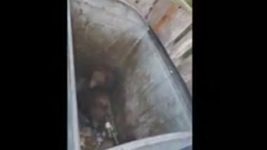 Doi pui de urs au căzut într-un tomberon din Poiana Brașov