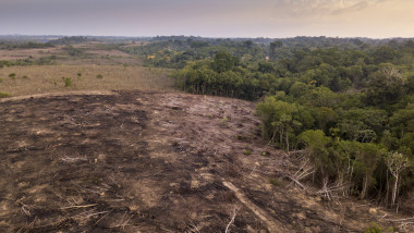 Drone aerial view of deforestation in the amazon rainforest. Trees cut and burned on illegally to open land for agriculture and livestock in the Jamanxim National Forest, Para, Brazil. Environment.