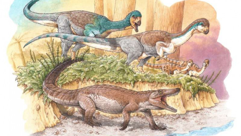 crocodili