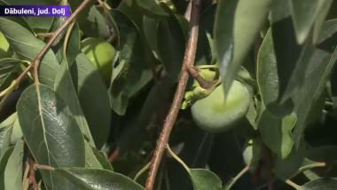 dabuleni fructe exotice