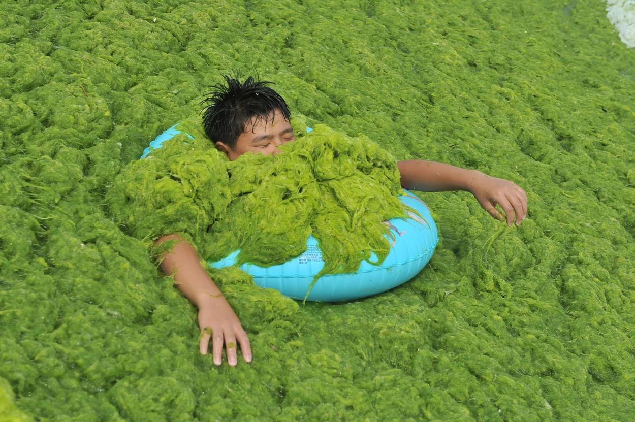 Invazie de alge pe plajele din provincia chineză Qingdao