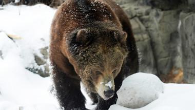 urs grizzly alaska