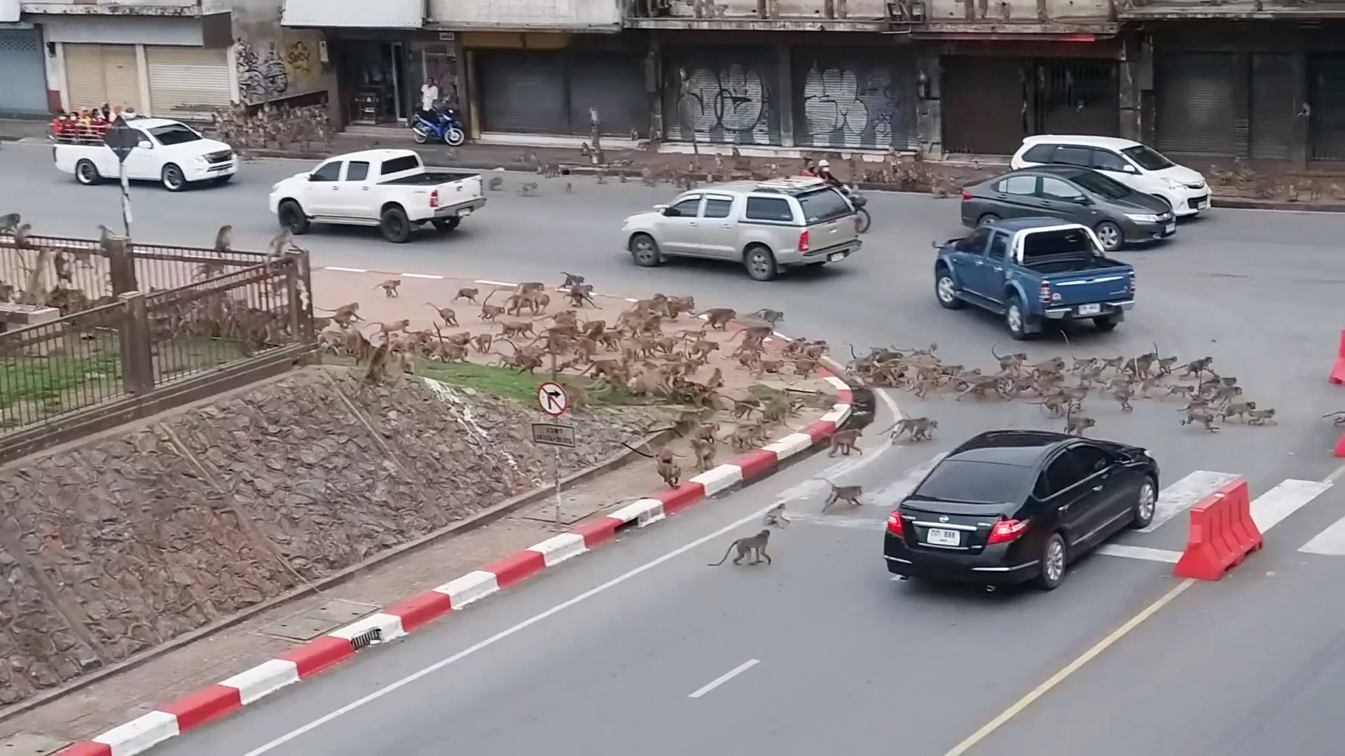 Rival wild monkeys have huge gang fight in front of shocked drivers