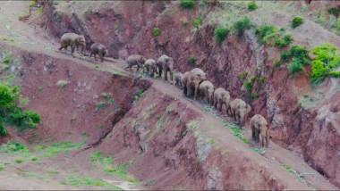 turmă de elefanți