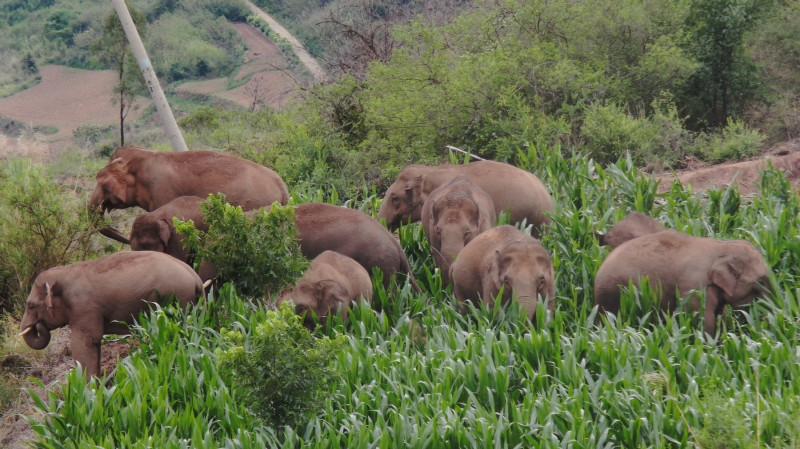 Elefanți prin frunziș