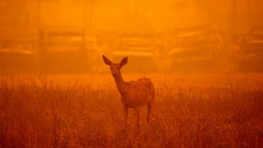 Dezastrul lăsat în urmă de incendiile de vegetație