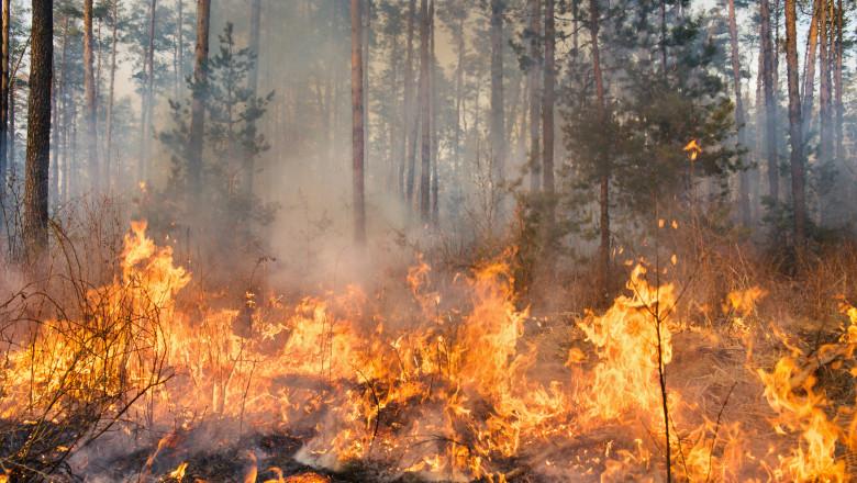 incendiu de vegetatie intr-o padure