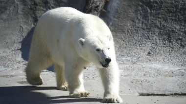 Polar bear caught in Russia's Sakha Republic, at Moscow Zoo