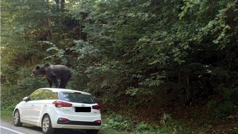 urs pe masina