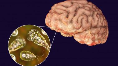 Naegleria fowleri, amiba care se hrănește cu creierul uman.