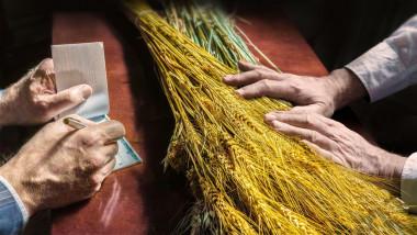 Cotaţiile la grâu sunt la cel mai ridicat nivel din ultimii ani