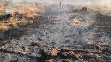 incendiu padure muntii sureanu