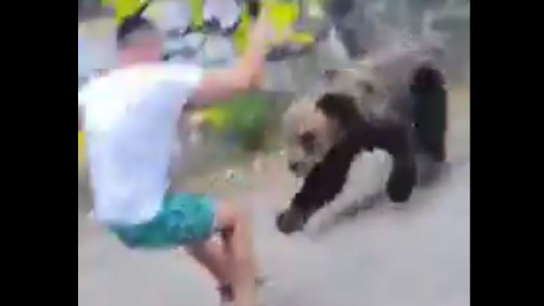 Un urs se repede la un tânăr care s-a apropiat de el