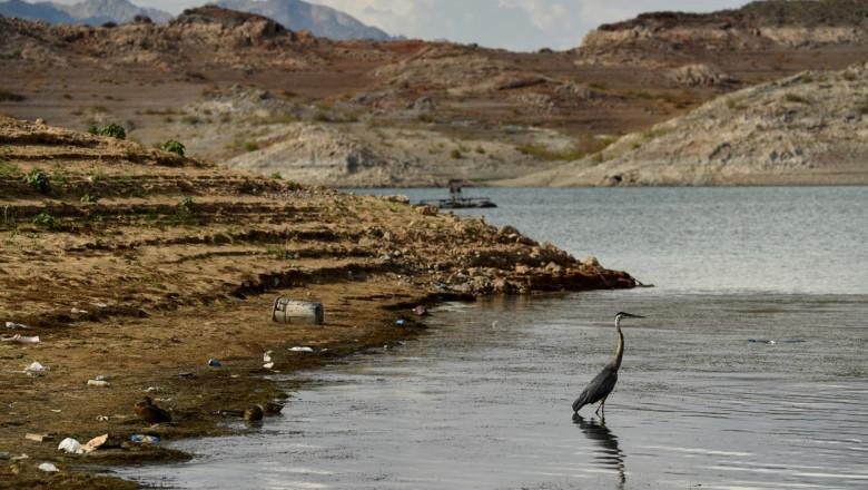 lacul mead cu apa in scadere si o pasare in apa