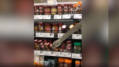 sarpe in raft la magazin printre borcane