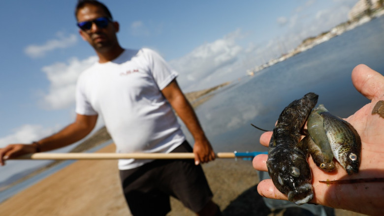 barbat care arata pesti morti in laguna mar menor