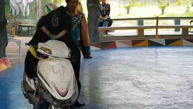 Urs cu pălărie urcat pe o motocicletă pentru o reprezentație la circul din Hanoi