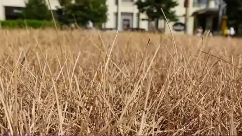 gazon uscat in bucuresti