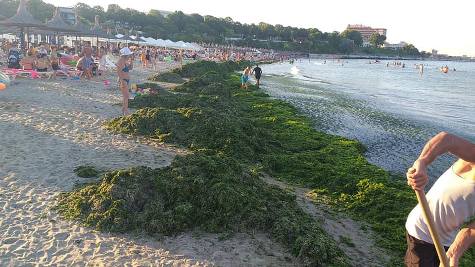 alge1
