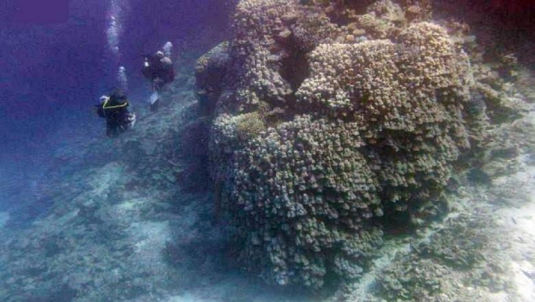 Colonie de corali descoperită în Marea Roșie.