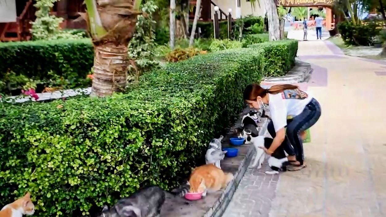 Pisici abandonate