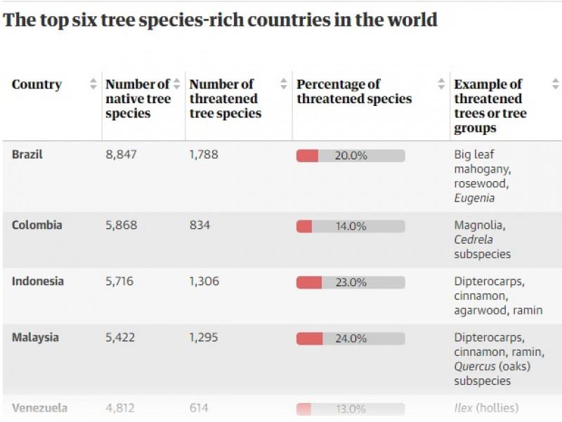 arbori in risc de disparitie