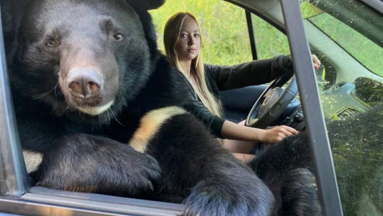 urs in masina