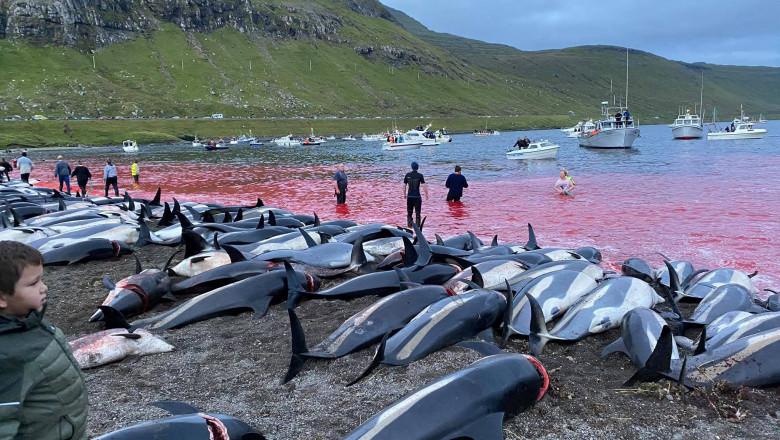 delfini ucisi