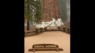 sequoia Generalul Sherman