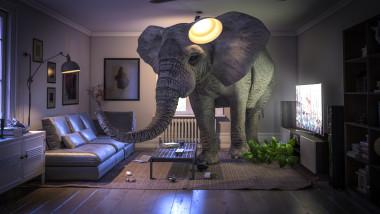 grafica cu un elefant intr-o casa